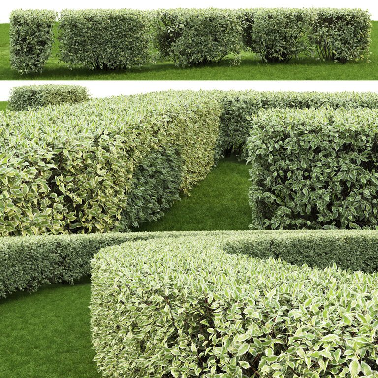 Забор живая изгородь: как вырастить и сформировать