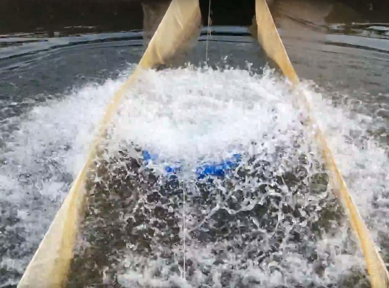 Как сделать аэрацию для пруда своими руками