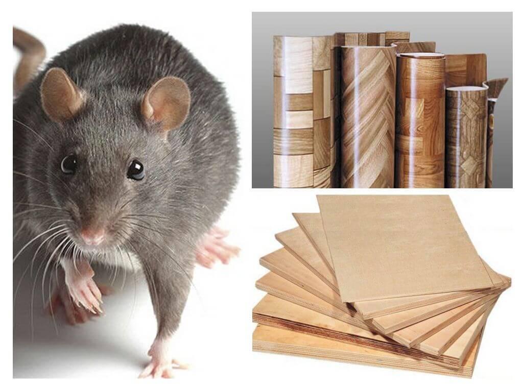 Какой утеплитель не грызут мыши: варианты утеплителей, которые не грызут мыши и крысы