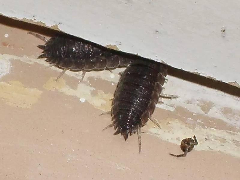 Избавляемся от насекомых в ванной