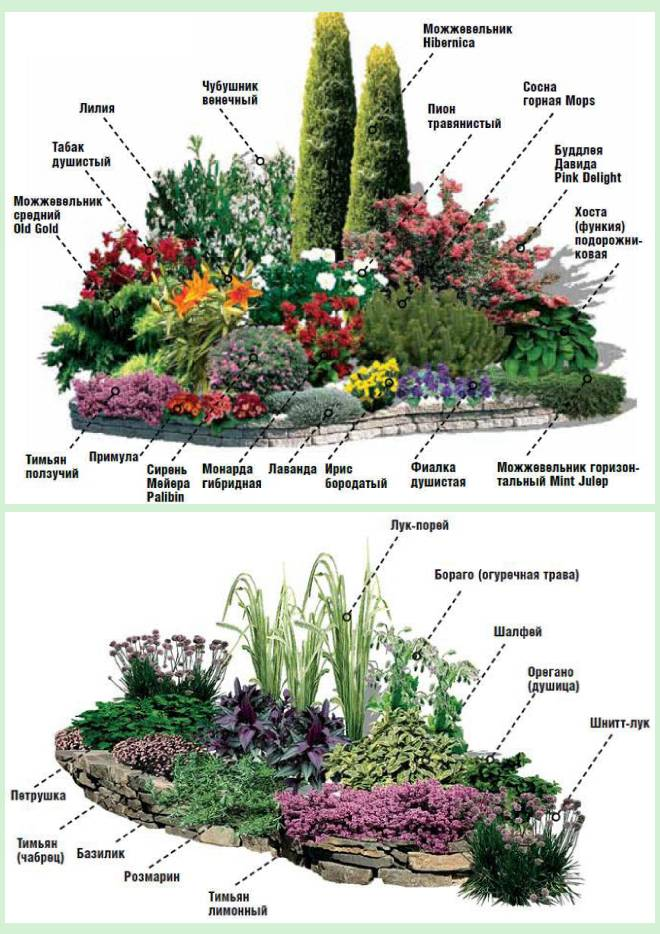 Альпинарий: виды, устройство, растения