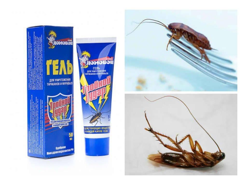 Как бороться с тараканами в квартире, лучшее средство от тараканов