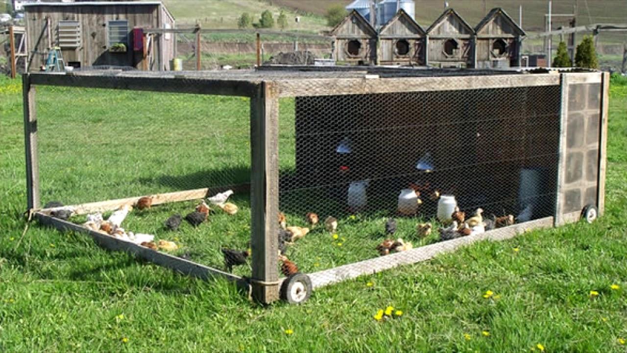 Как построить птичник для уток своими руками: выбираем с чего лучше построить птичник, этапы возведения