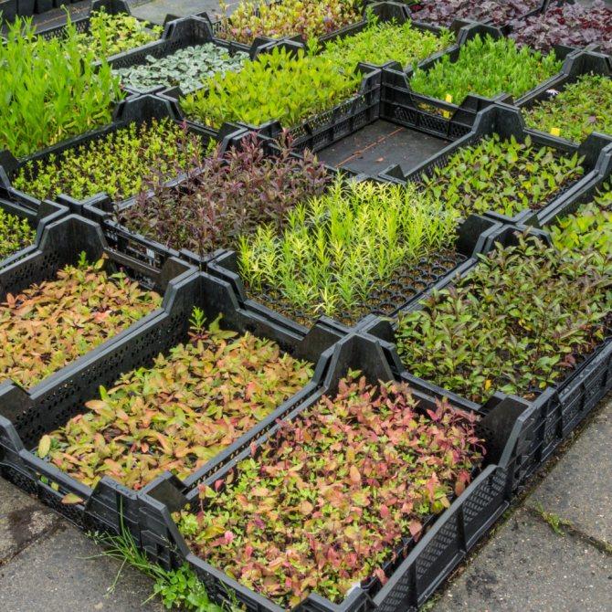 Огород для ленивых и умных: как сделать удобные и урожайные грядки