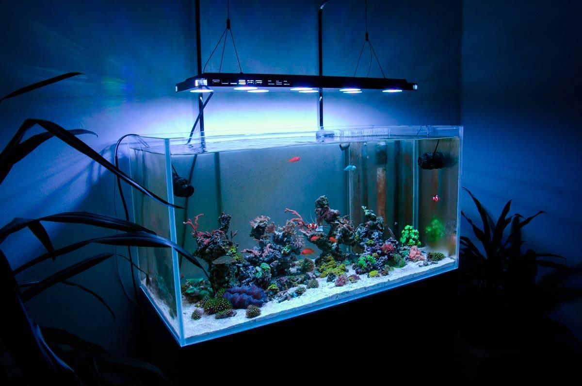 Как сделать свет в аквариуме