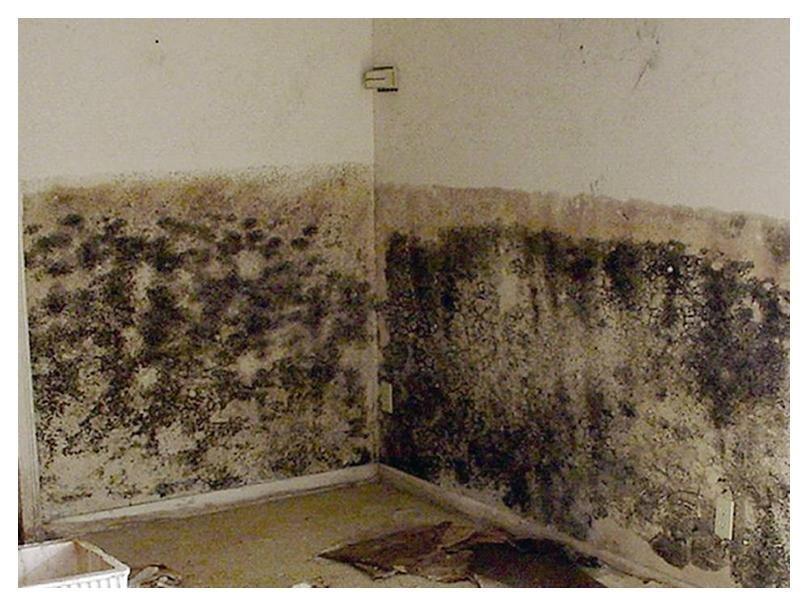 Чем опасна черная плесень в доме для организма человека и как от неё избавиться?