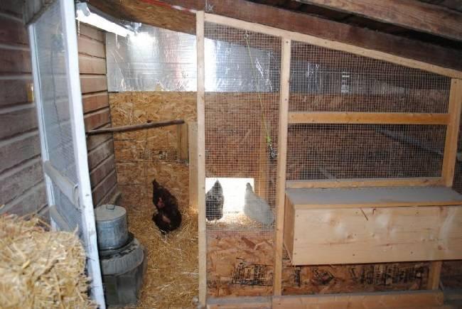 Сарай для кур на зиму: строим и утепляем курятник самостоятельно