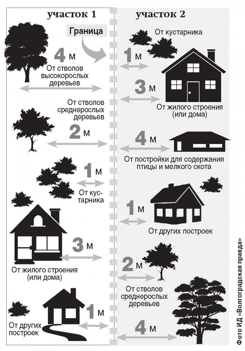 Расстояние высадки деревьев по санитарным правилам